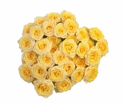 BLOOM HAUS™ Garden Delight Roses Perspective: back