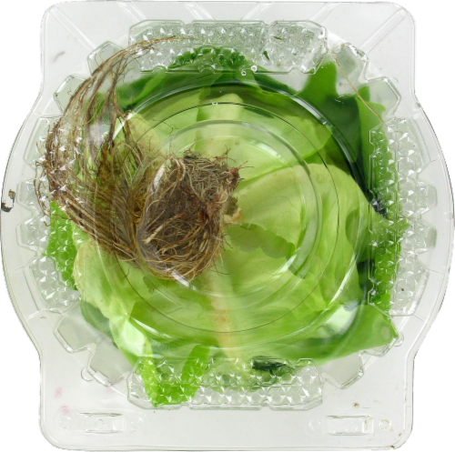 Private Selection™ Living Lettuce Perspective: back