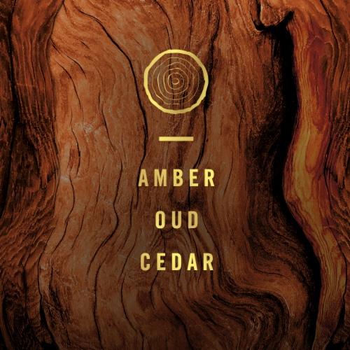 Febreze Origins Fade Defy PLUG Wood Air Freshener & Odor Eliminator Perspective: back