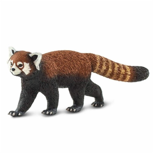 Red Panda Perspective: back