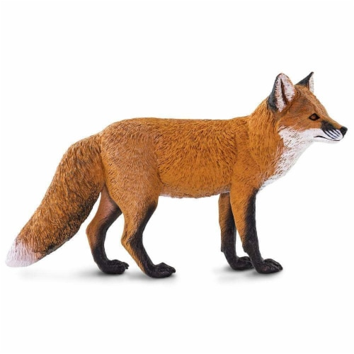 Red Fox Perspective: back