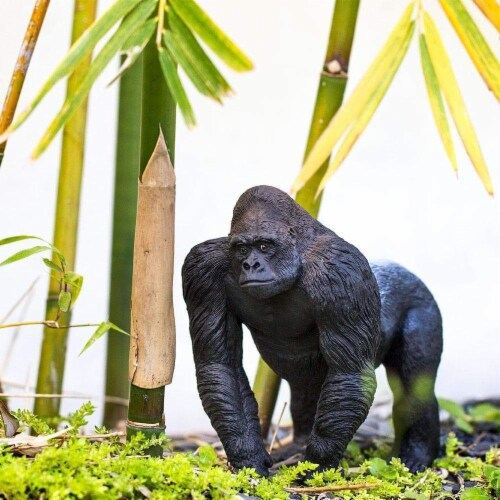 Silverback Gorilla Toy Perspective: back