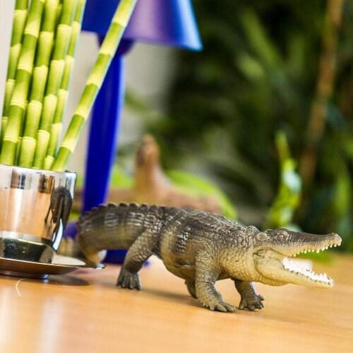 Saltwater Crocodile Perspective: back