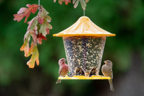 Stokes Select Assorted Round Seed Feeder Perspective: back