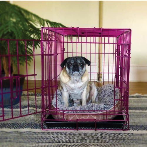 Backyard Expressions Pink 24 Inch Foldable Double Door Metal Pet Crate Perspective: back
