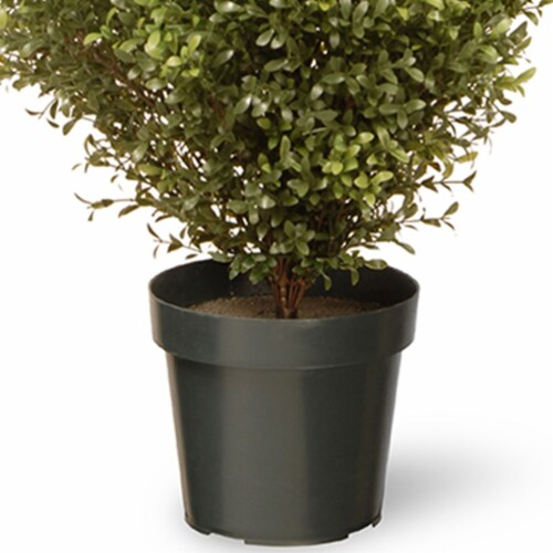 National Tree Company 60 Inch Argentia Artificial Plant Tree with Green Pot Perspective: back