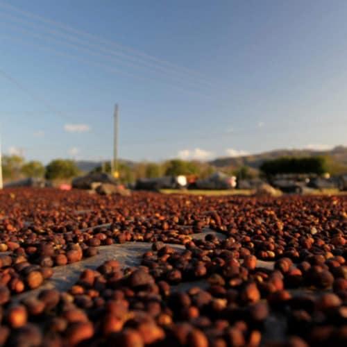 Premium Kaya Kopi Yirgacheffe  Ethiopian Arabica Specialty Roasted Ground Coffee Beans 12oz Perspective: back