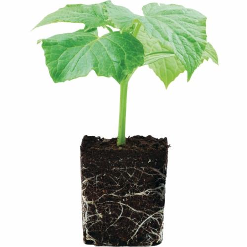 Burpee 4 Lb. 3-6-4 Organic Starter & Transplanting Dry Plant Food BP4ST Perspective: back