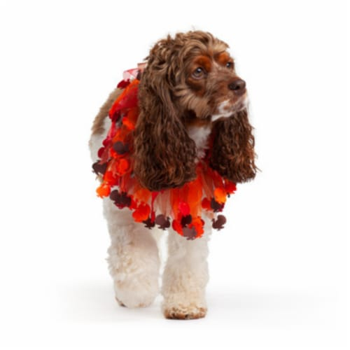 Midlee Thanksgiving Turkey Decorative Dog Collar (X-Large) Perspective: back