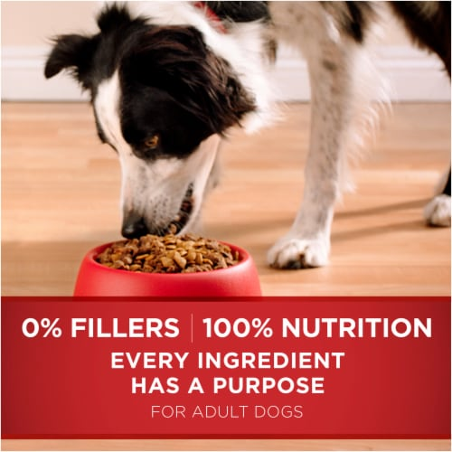Purina ONE SmartBlend Chicken & Rice Formula Natural Dry Dog Food Perspective: bottom