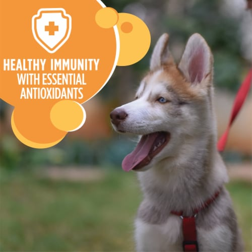 IAMS ProActive Chicken Health Smart Large Breed Dry Puppy Food Perspective: bottom