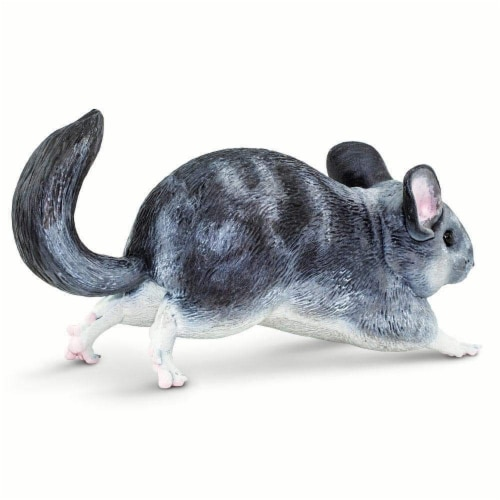 Chinchilla Perspective: bottom