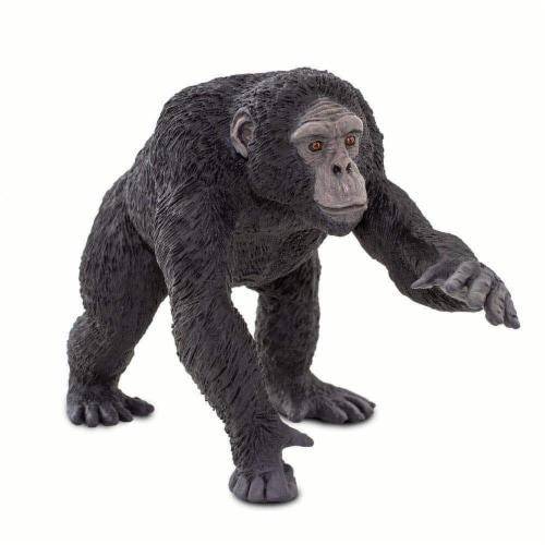Chimpanzee Perspective: bottom