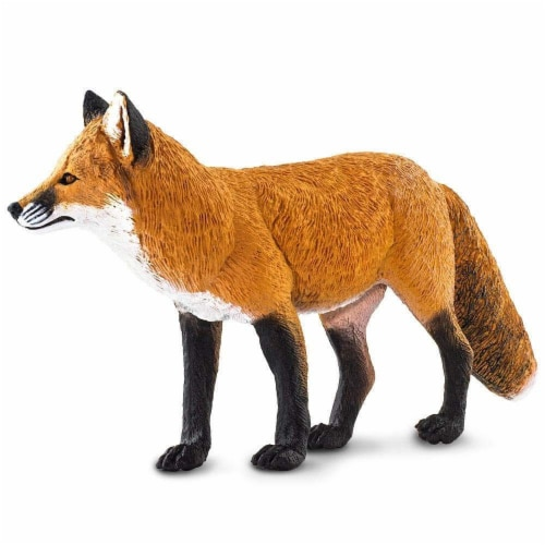 Red Fox Perspective: bottom