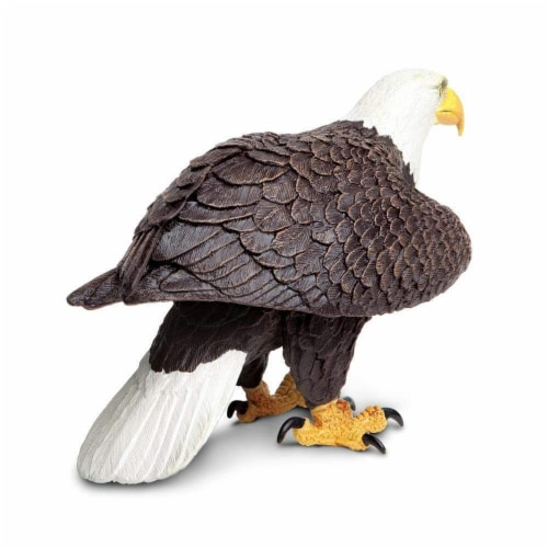 Bald Eagle Perspective: bottom
