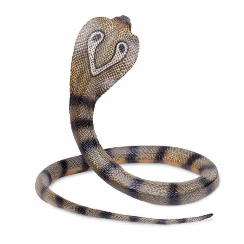 Cobra Perspective: bottom