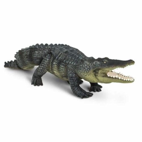 Saltwater Crocodile Perspective: bottom