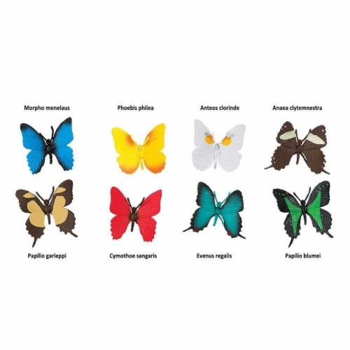 Butterflies TOOB Perspective: bottom