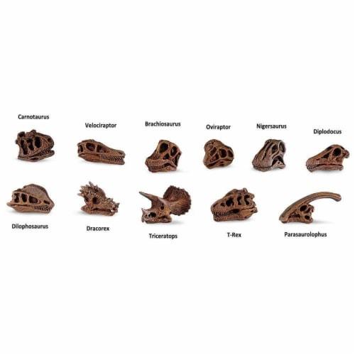 Dinosaur Skulls TOOB Toy Perspective: bottom