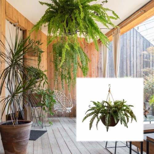 Faux Boston Fern  Hanging Natural and Lifelike Artificial Arrangement and Imitation Greenery Perspective: bottom