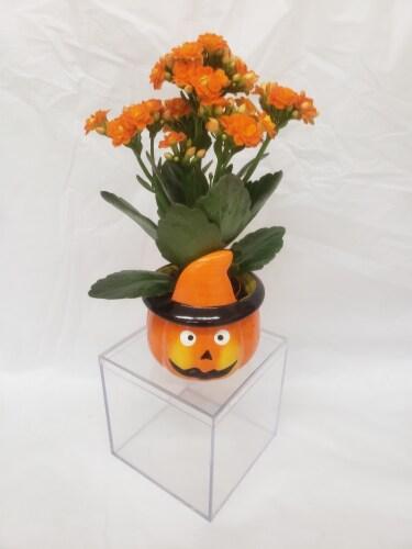 Set of 4 Miniature Plants in Halloween Ceramic Pots Perspective: bottom