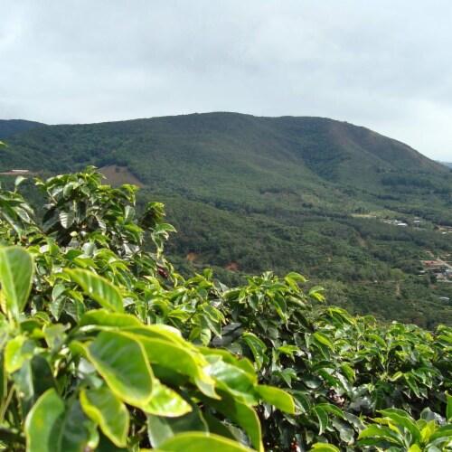 Premium Kaya Kopi Tarrazu Costa Rican Geisha Arabica Roasted Whole Coffee Beans 12 Oz Perspective: bottom