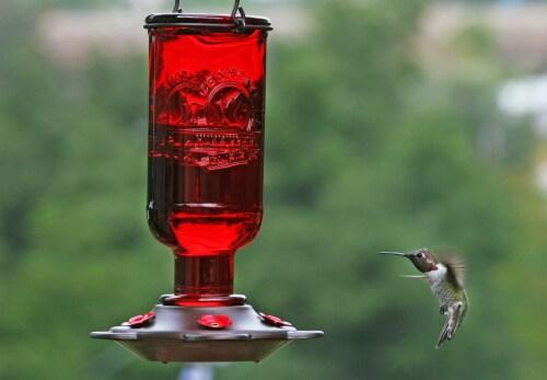 More Birds Elixir Hummingbird Feeder - Red Perspective: bottom