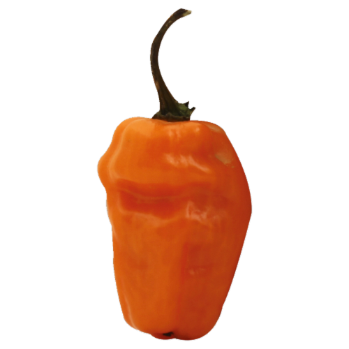 Peppers - Habanero Perspective: front