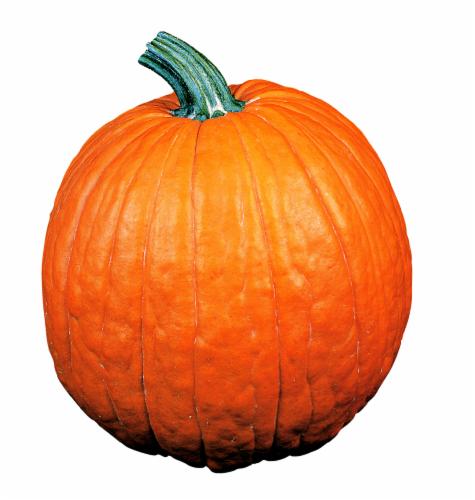 Pie Pumpkins Perspective: front