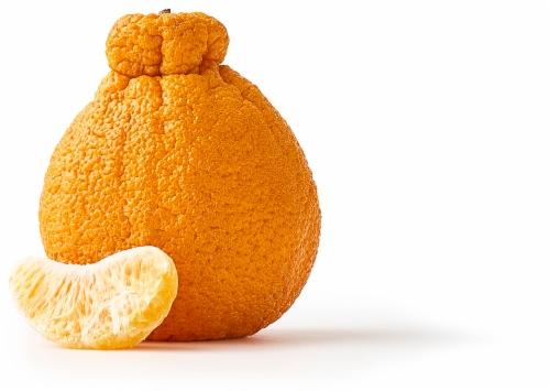 Sumo Citrus Perspective: front