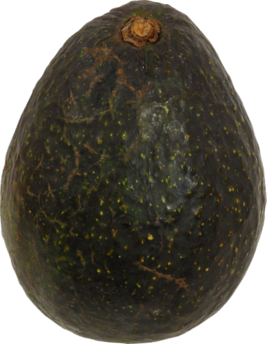 Hass Avocado Perspective: front