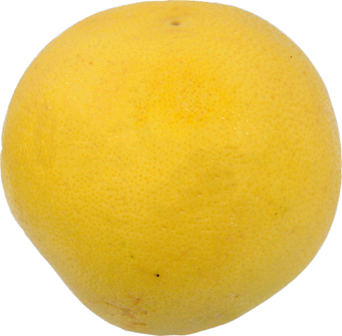 Grapefruit - White - Large Perspective: front