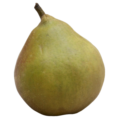 Seckel Pear Perspective: front