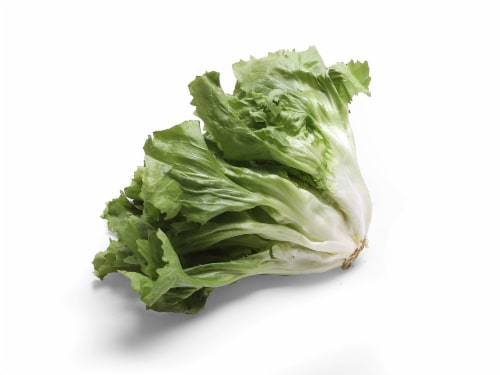 Escarole Lettuce Perspective: front