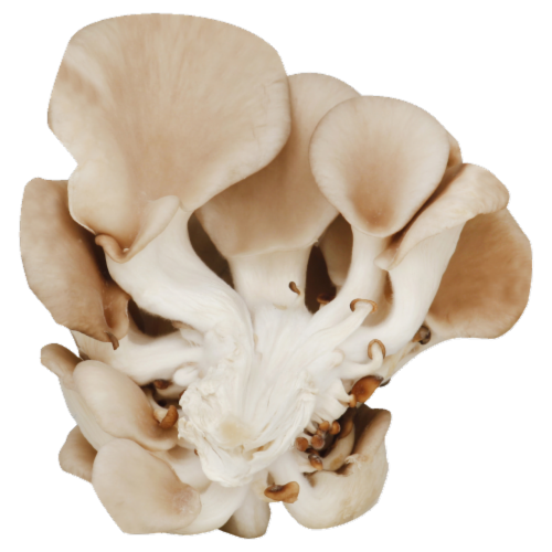 Mushrooms - Oyster Perspective: front