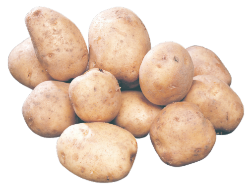 Potatoes - Kennebec - Seed Perspective: front