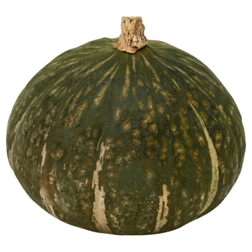 Buttercup Squash Perspective: front
