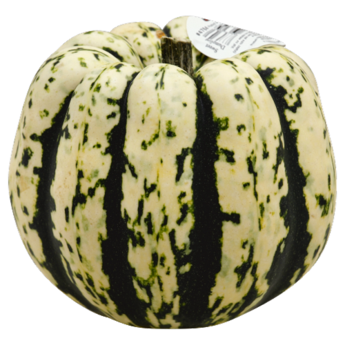 Squash Perspective: front