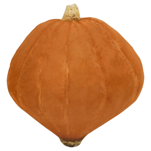Golden Nugget Squash Perspective: front