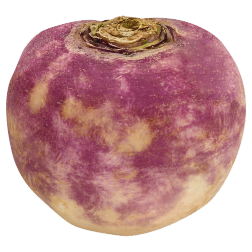Turnip Perspective: front
