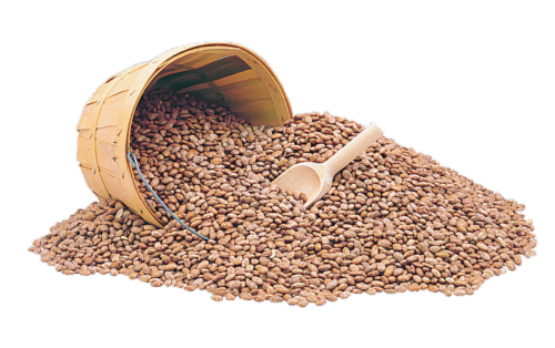 Dried Pinto Beans Perspective: front