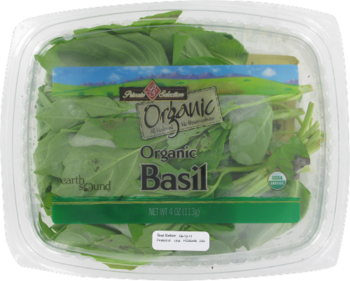 Basil Perspective: front