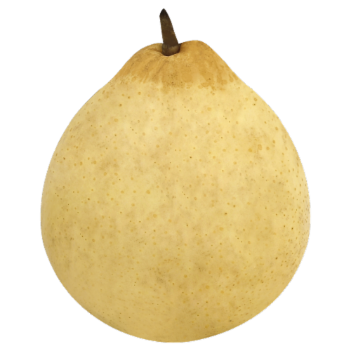 Pear - Yali Perspective: front