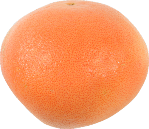 Organic Red Grapefruit Perspective: front