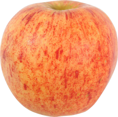 Organic Gala Apples - Small Perspective: front
