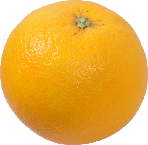 Organic Large Valencia Oranges Perspective: front