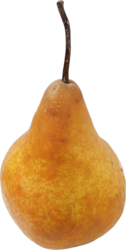 Organic Bosc Pear Perspective: front