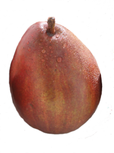 Organic Red Anjou Pears Perspective: front