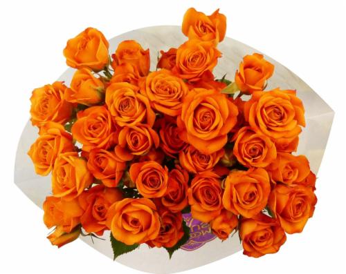 BLOOM HAUS™ Garden Delight Roses Perspective: front
