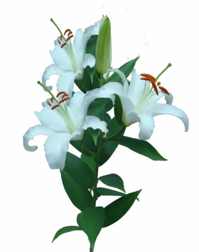 BLOOM HAUS White Oriental Lillies Perspective: front